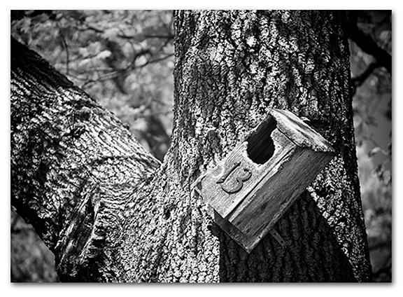 bad-luck-birdhouse-bw